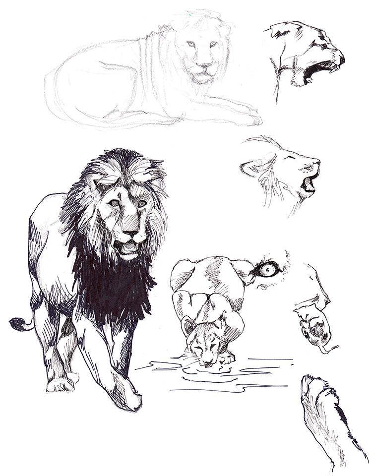 Animals_Process_0006.jpg