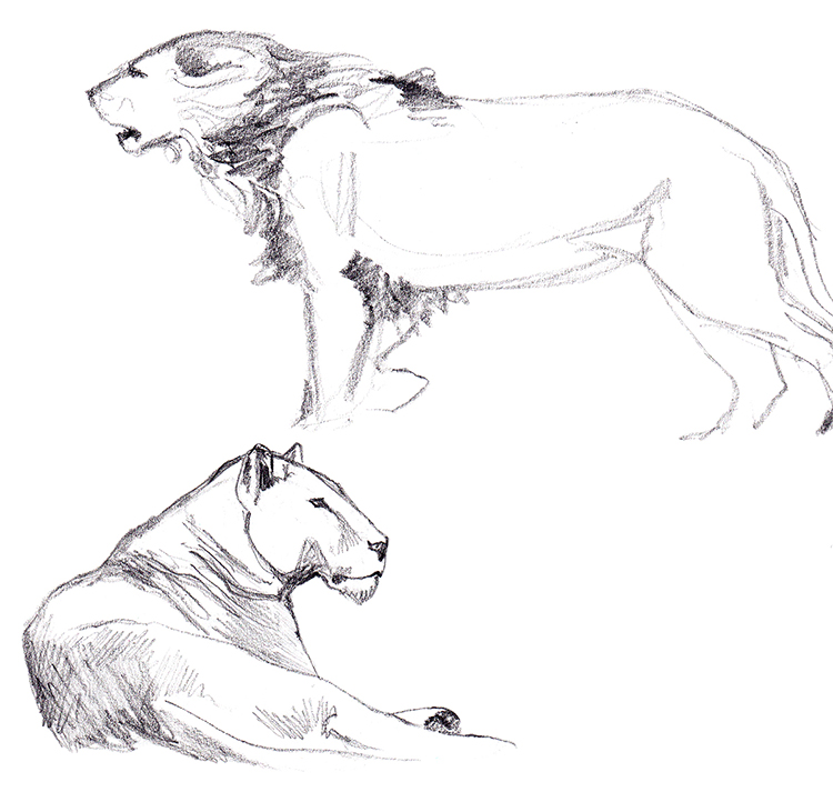 Animals_Process_0007.jpg