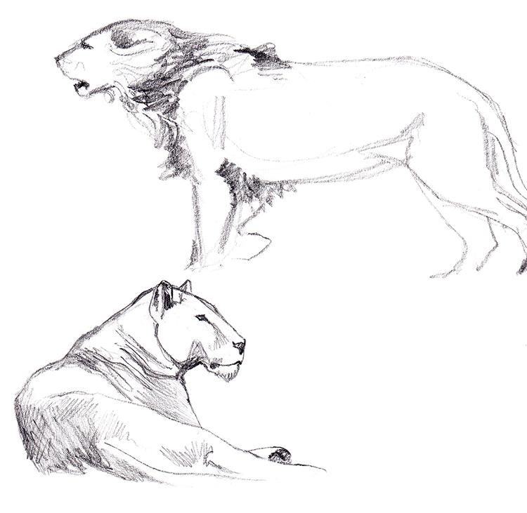 Animals_Process_0007.jpg