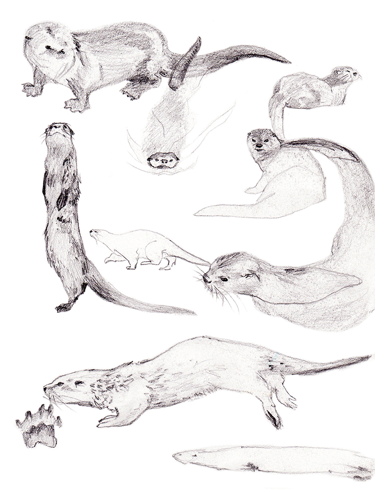 Animals_Process_0017.jpg