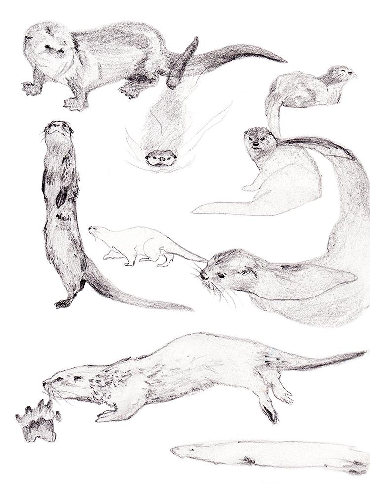 Animals_Process_0017.jpg