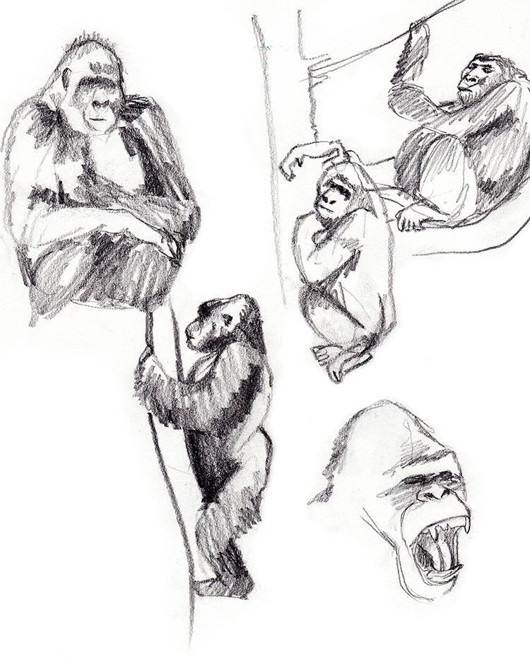 Animals_Process_0024.jpg