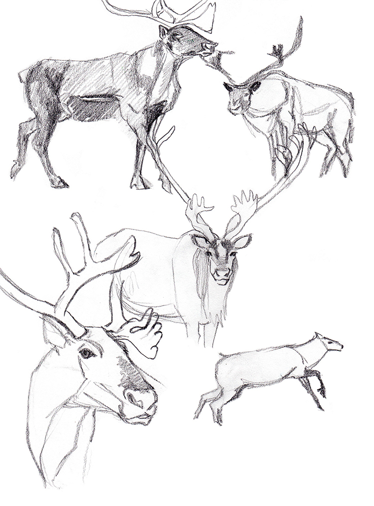Animals_Process_0028.jpg