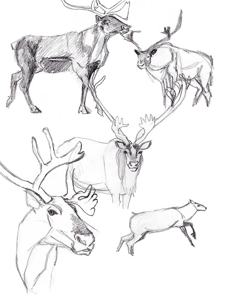 Animals_Process_0028.jpg