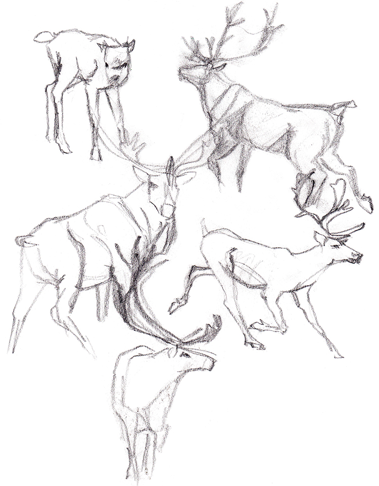 Animals_Process_0029.jpg