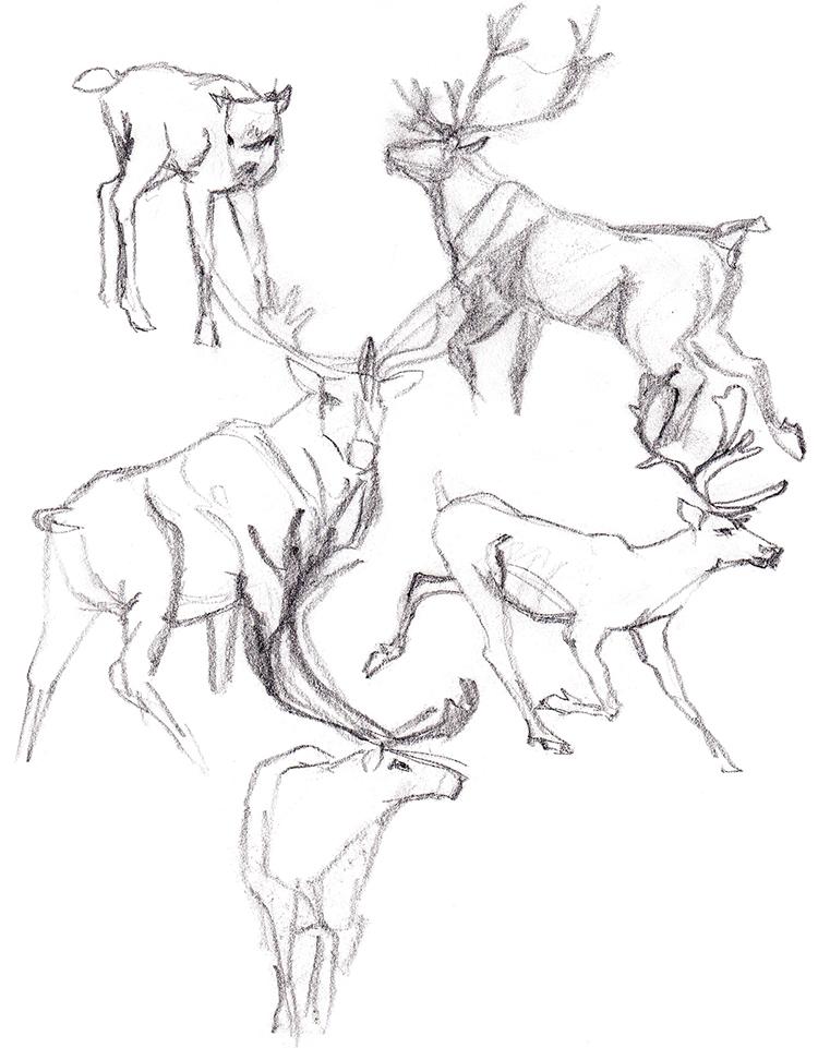 Animals_Process_0029.jpg
