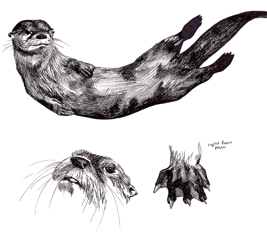 Animals_Process_0018.jpg