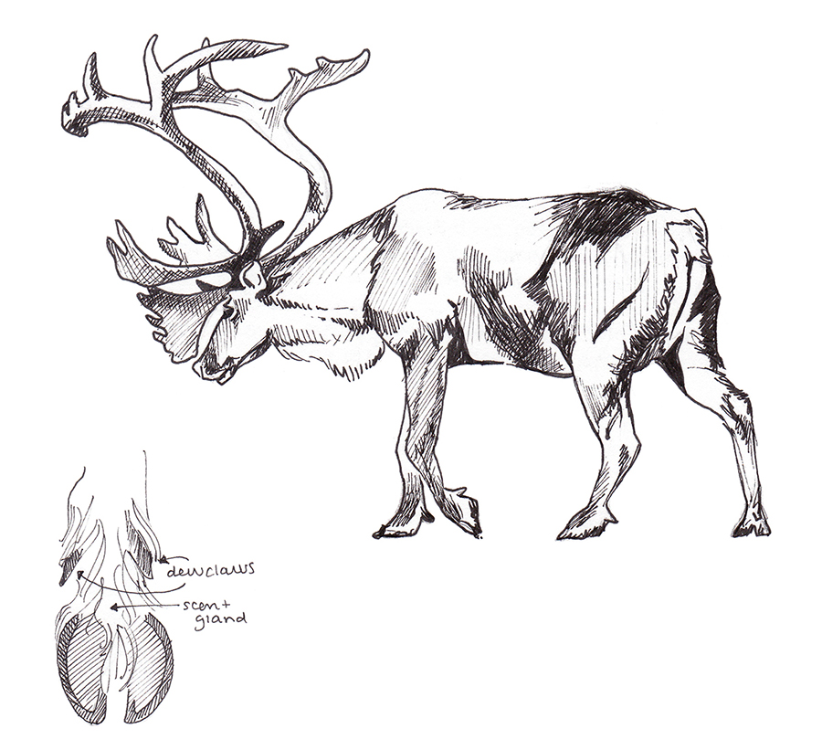 Animals_Process_0027.jpg