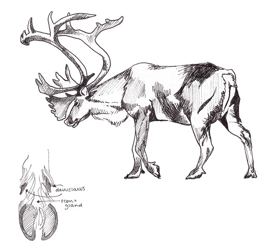 Animals_Process_0027.jpg