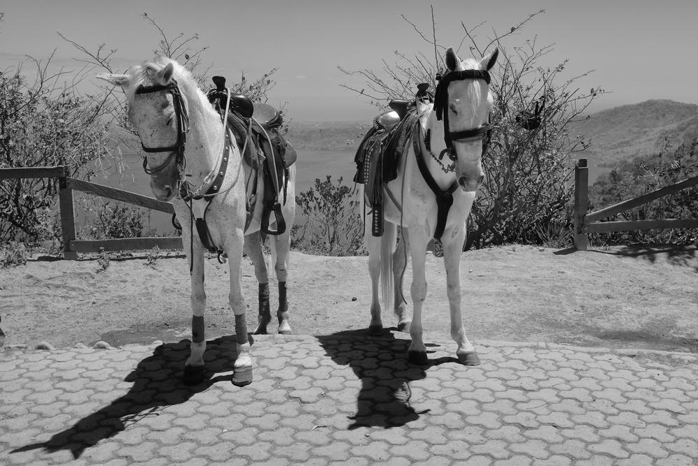 Two horses (1 of 1).jpg