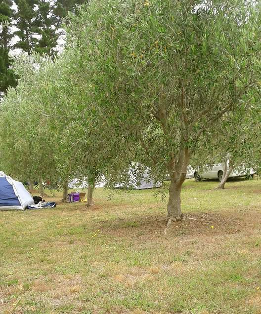 poppawhiwhi-freedom-camp-2