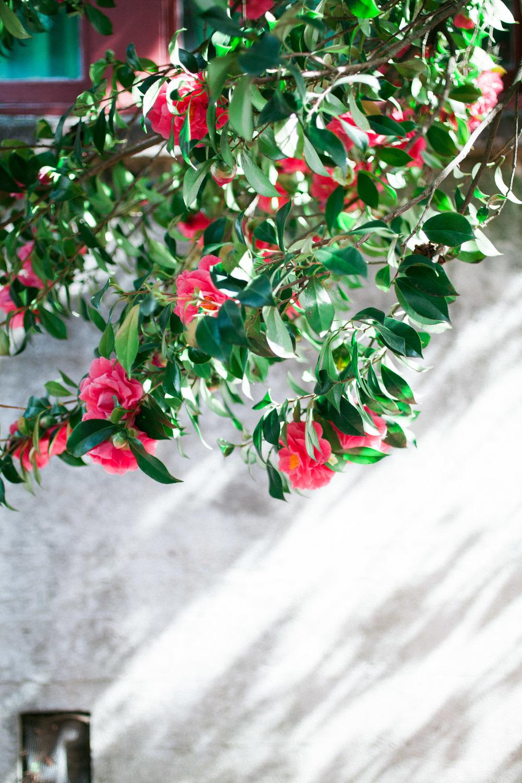 flowers-14.jpg