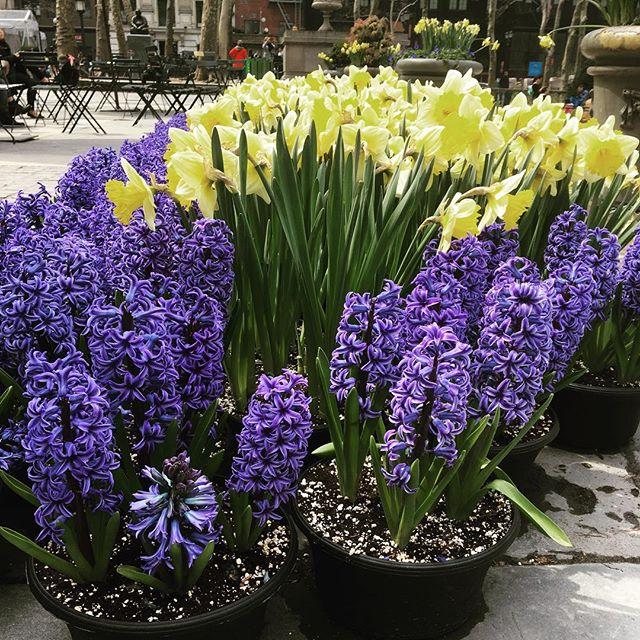 Bryant Park, sprung. #pottedplants #springtimenyc #nyc #bryantpark #selfcare