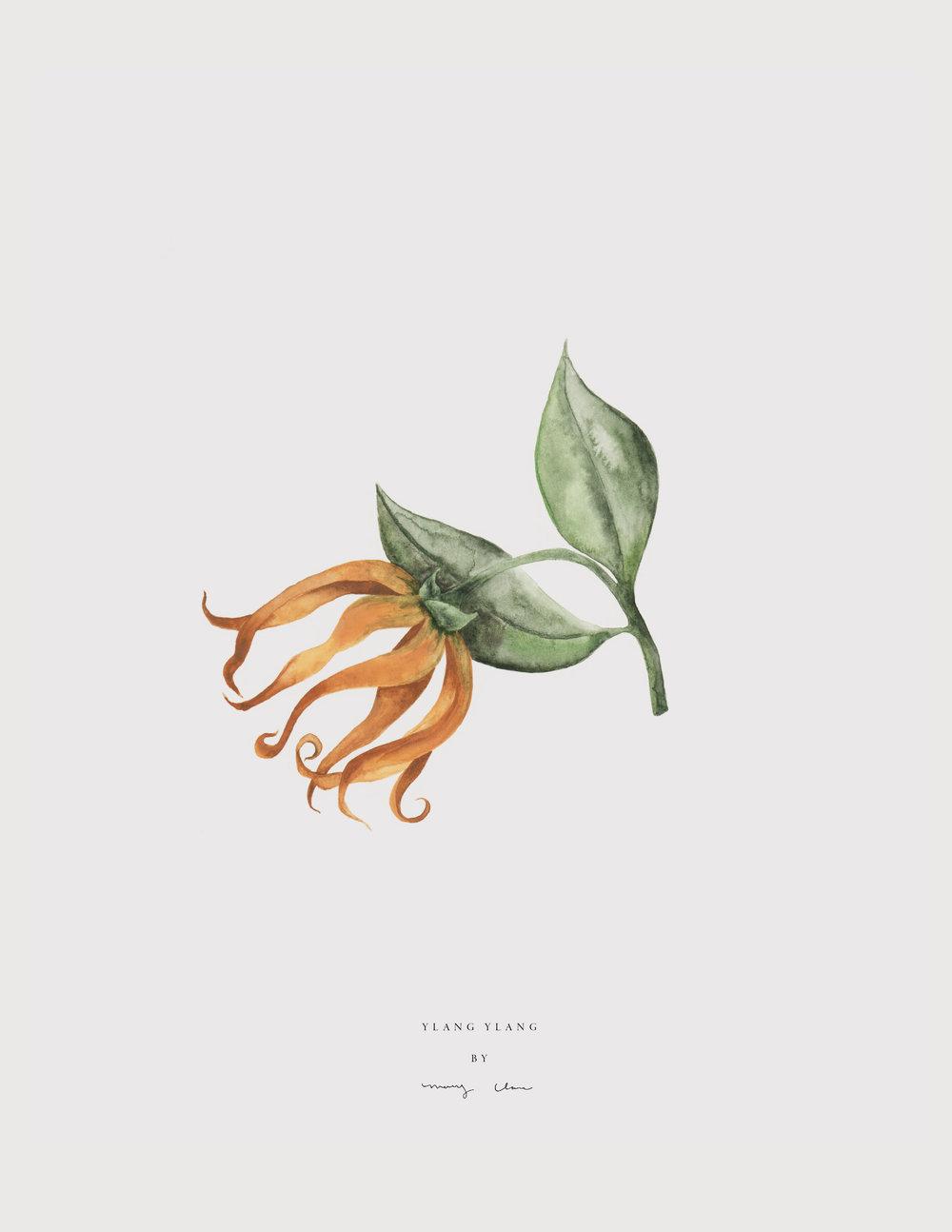 Leaves-maryclarewilkie-01.jpg
