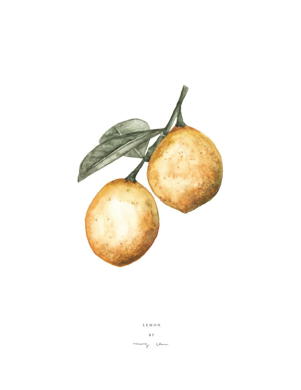Lemon-maryclarewilkie-01.jpg