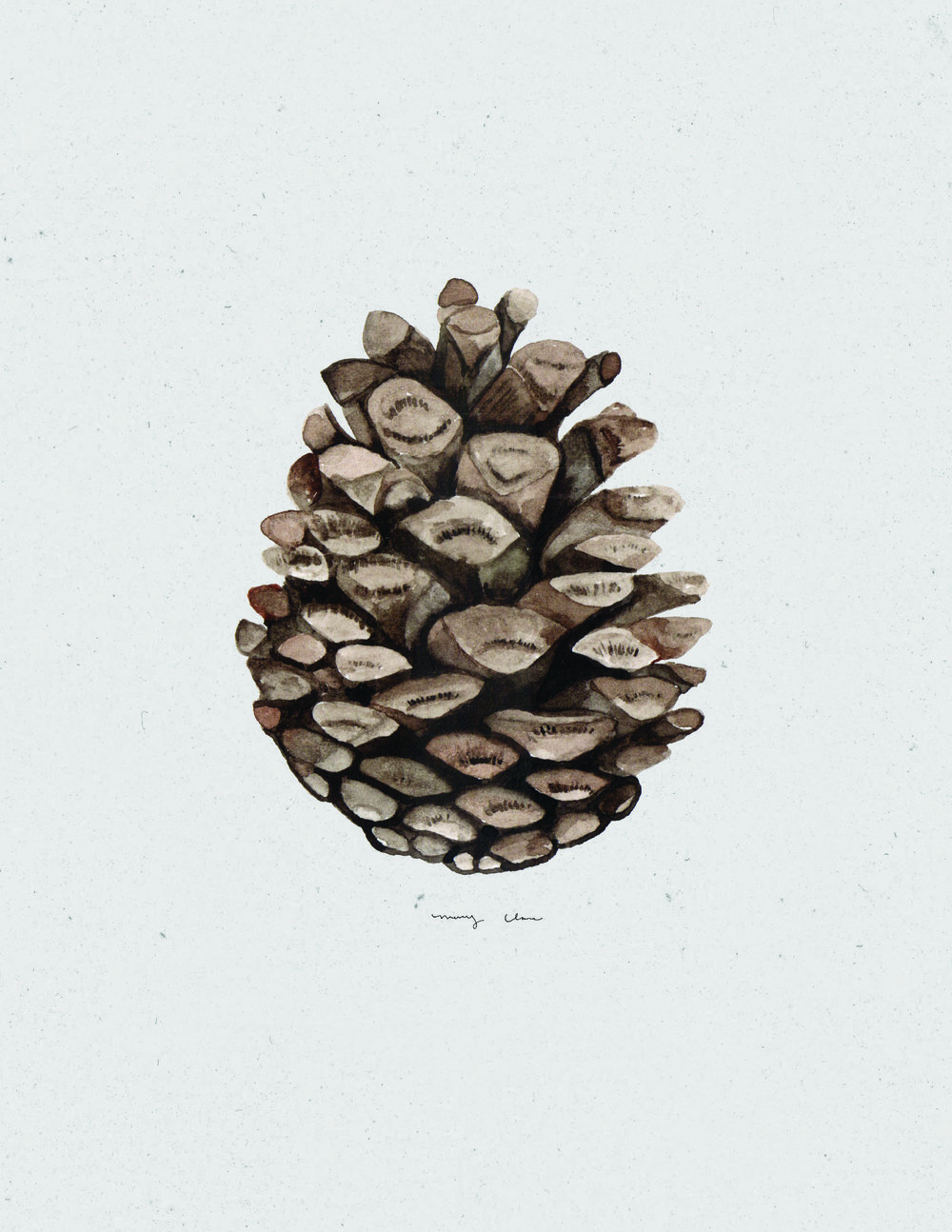 Pinecone: Mary Clare Wilkie
