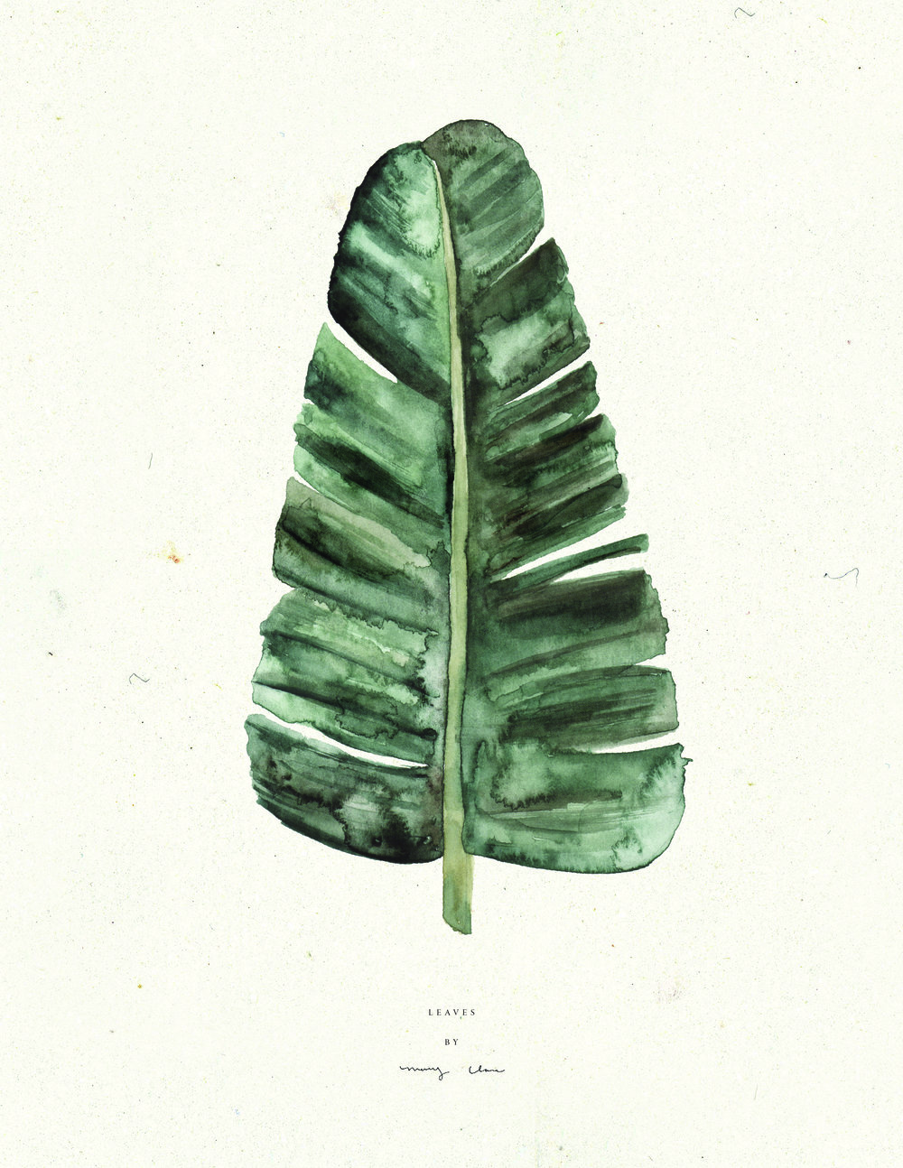 Leaves-watercolour-maryclarewilkie-03.jpg