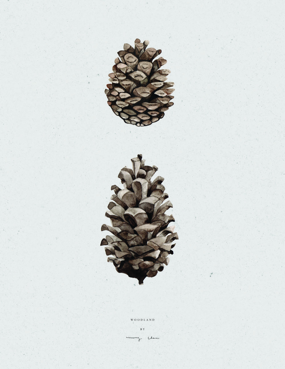 woodland-pinecones-watercolour-maryclarewilkie-04-03.jpg