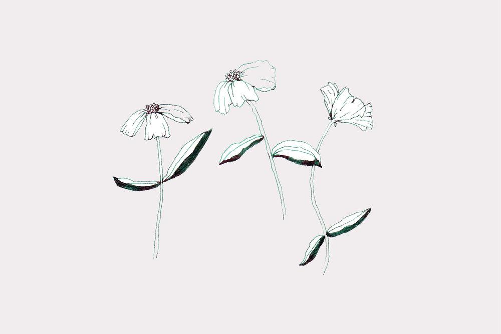 Wilkie_maryclarewilkie-clinedrawing-flowers-02.jpg