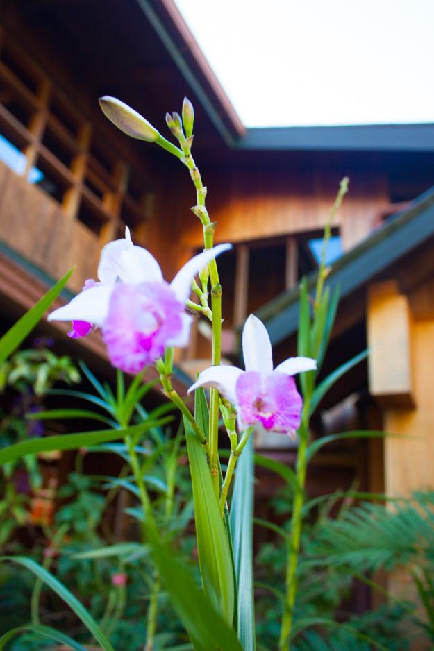 20140112_CostaRica_039_flowers.jpg