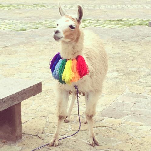 20140207_Peru_086_rainbow_llama.jpg