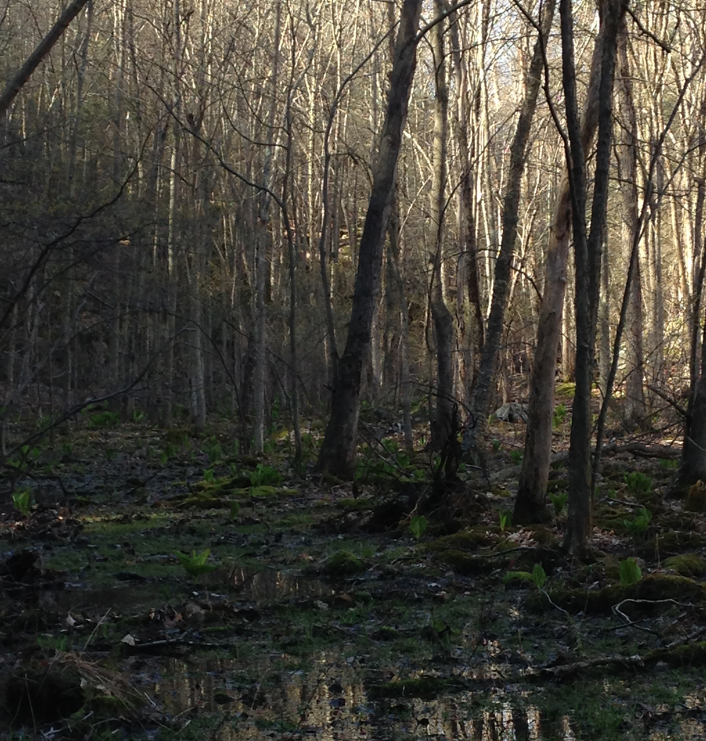 SwampBurroughs.jpg