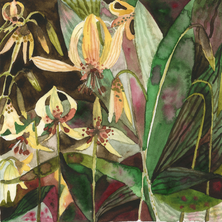 """Trout Lillies""   Watercolor Painting"