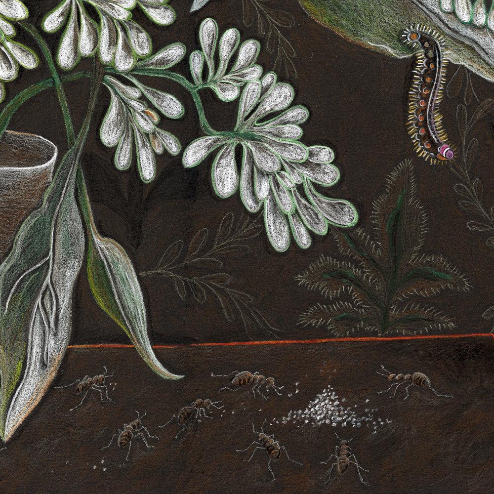 """Eucalyptus and Thistle"""