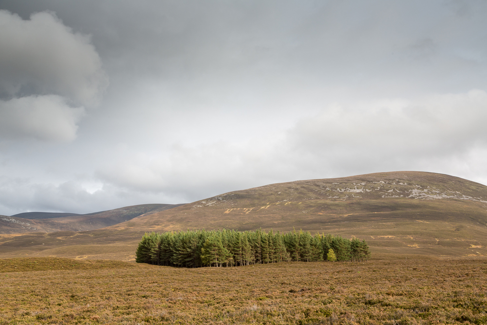 plantation, Cairngorms