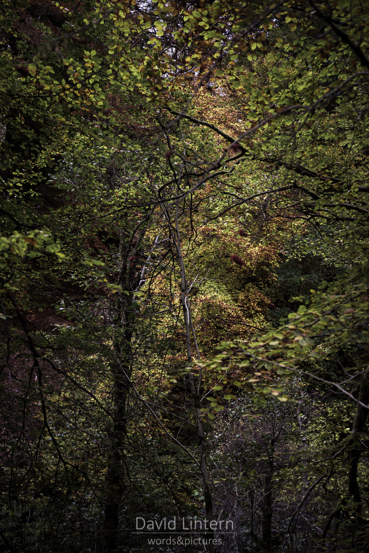 Lintern-09670.jpg