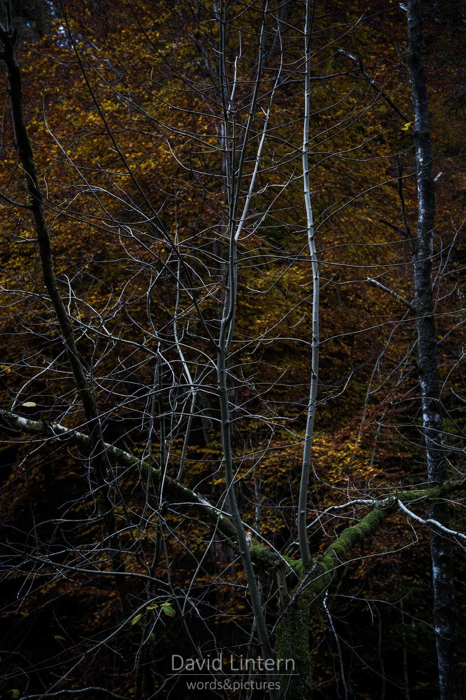 Lintern-09676.jpg
