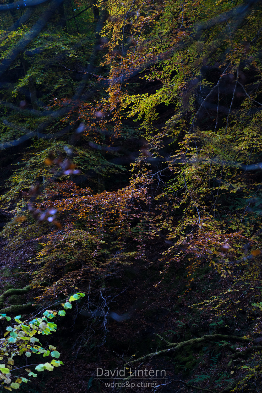 Lintern-09688.jpg