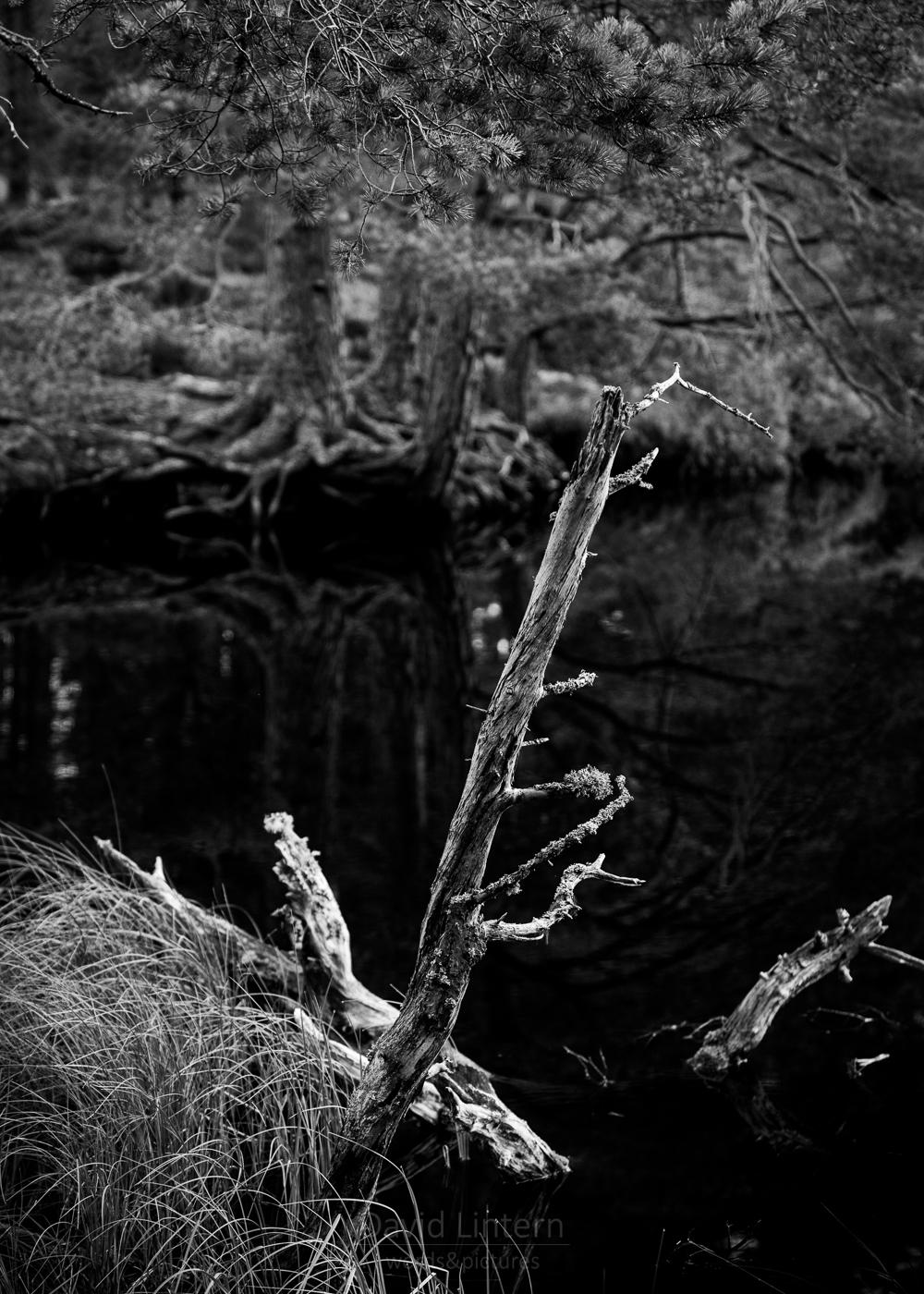 Lintern-02580.jpg