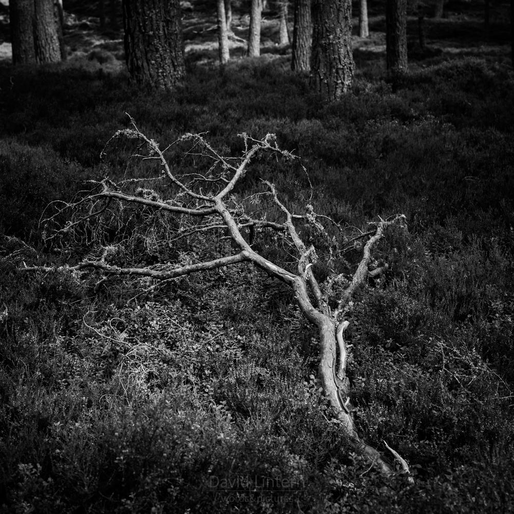 Lintern-02639.jpg