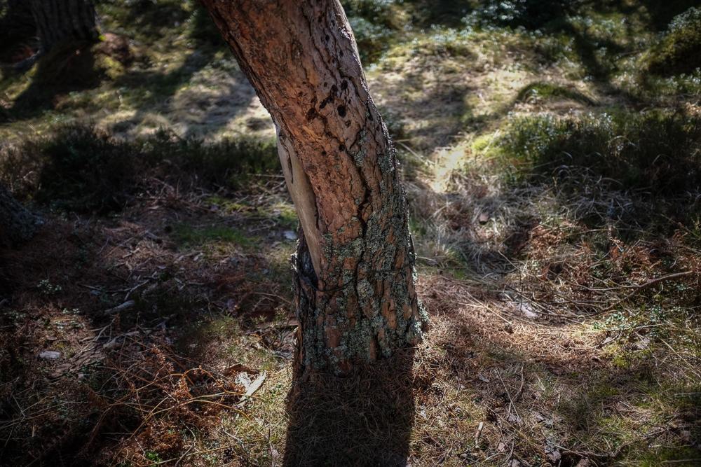 Lintern-6099.jpg
