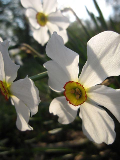 BB_flowers1.jpg