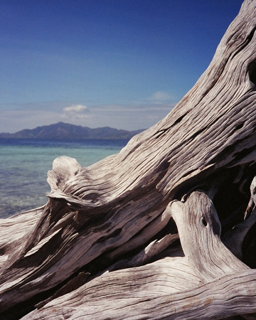 driftwood1_small.jpg