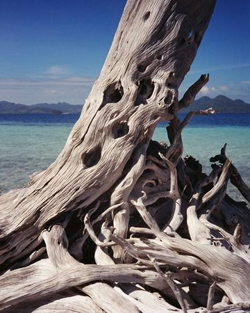 driftwood2_small.jpg