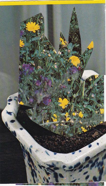 """Succulent 05/ 4""""x3"""" / 2015"""