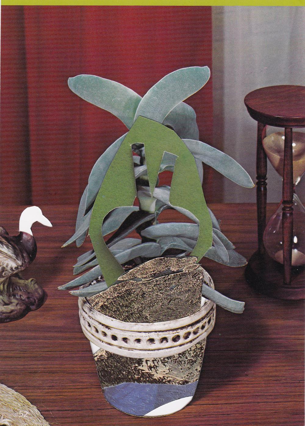 """Succulent 10 / 8.5""""x6""""/2015"""