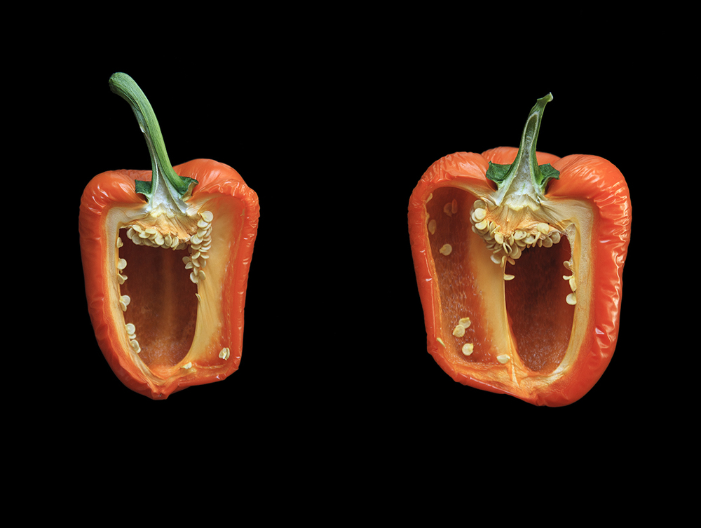 Orange Pepper, Day Three