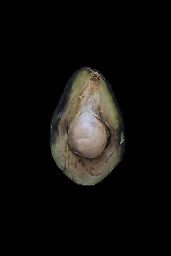 Avocado, Day Four