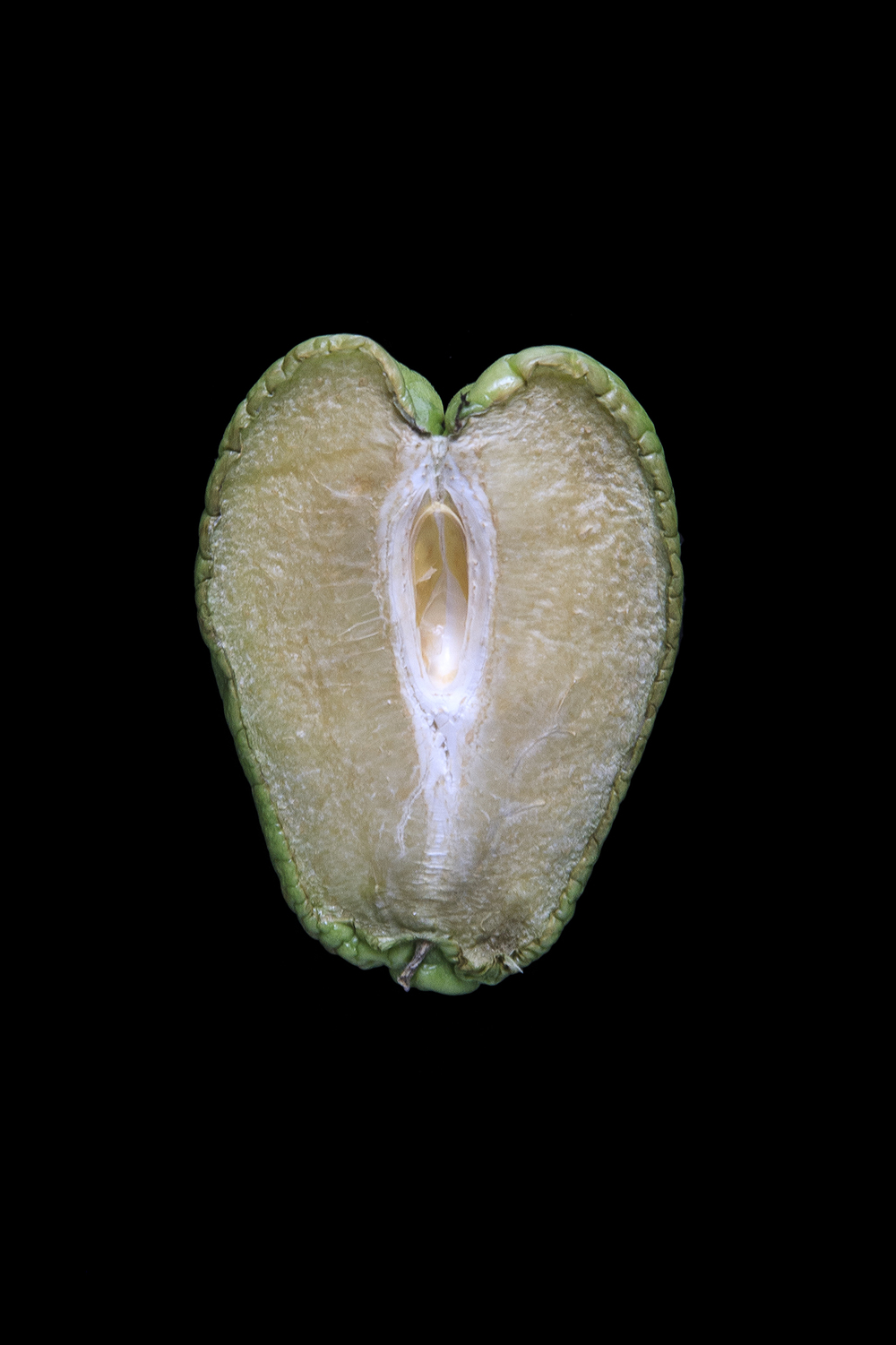 Chayote, Day Five