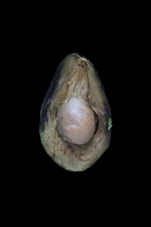 Avocado, Day Seven