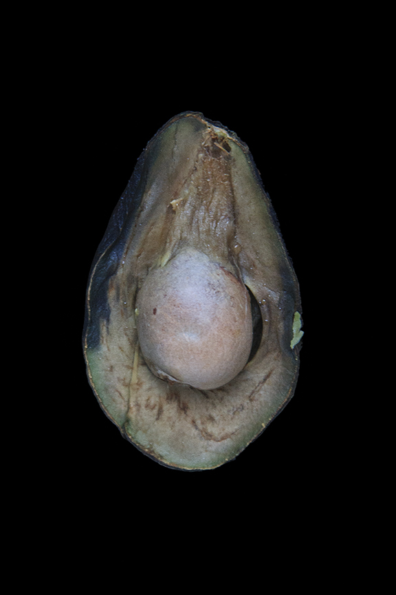 Avocado, Day Eight