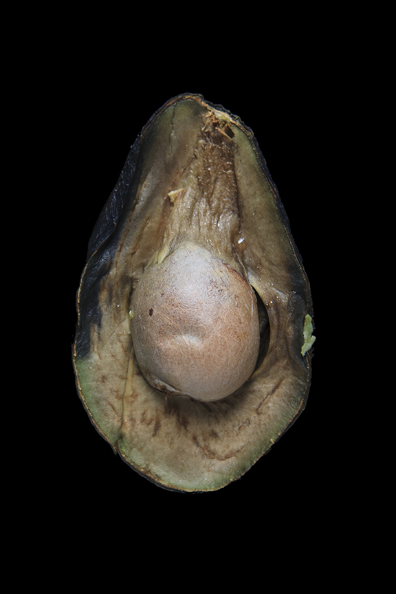 Avocado, Day Nine