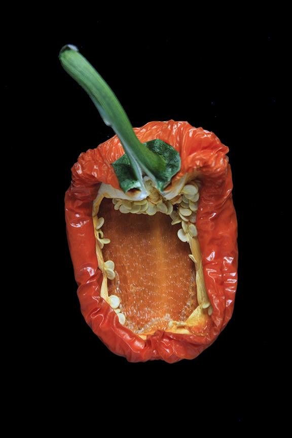 Orange Pepper, Day Nine