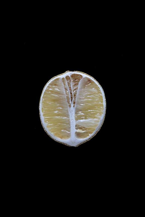 Lemon, Day Ten