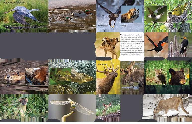 NSNP_Brochure_WEB_4.png
