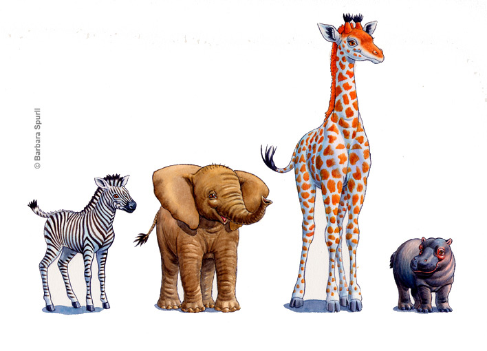 Four Baby Animals